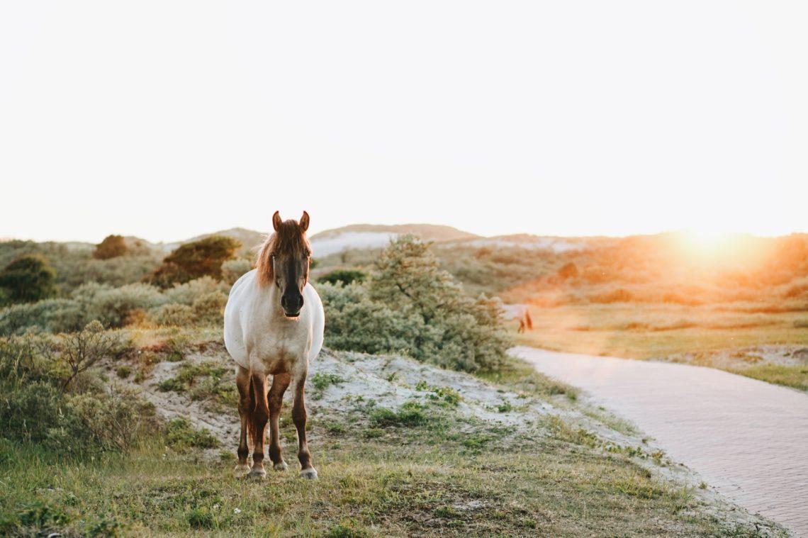 5 grunner til å sko hesten din – Aja Nafstad